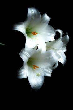 White Lilly #MySphereOfLife #MothersDay