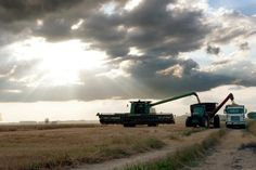 Farming... harvesting wheat
