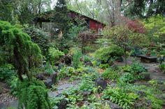 Spring Gardens at Lost Horizons Nursery Lost Horizon, Spring Garden, Nursery, Gardens, Display, Plants, World, Floor Space, Billboard