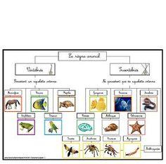 Chartes & cartes de nomenclature «règne animal» | Boutique Documents Montessori