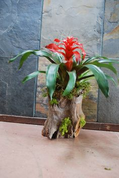 From our Collection: Deep Woods Orchids Garden, Orchid Plants, Air Plants, Indoor Plants, House Plants Decor, Plant Decor, Tropical Garden, Tropical Plants, Succulents Diy