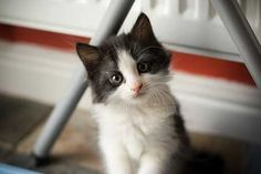 cute+cats+pictures+1.jpg (450×300)