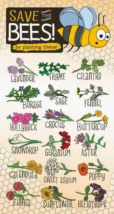 Blumen für Bienen pflanzen! #urbannature