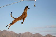 There is a reason that these amazing canine's are used in the army.  Repinned by Cattail Down. Follow us on Blog Lovin'! http://www.bloglovin.com/blog/7118895/cattail-down