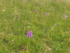 These are all fragrant orchids- their smell is stunningly other-worldly. The Beloved Burren never fails to suprise and delight me! Rosslyn Chapel, Hidden Places, Spirituality Books, Fails, Orchids, Scotland, Ireland, Places To Visit, Earth