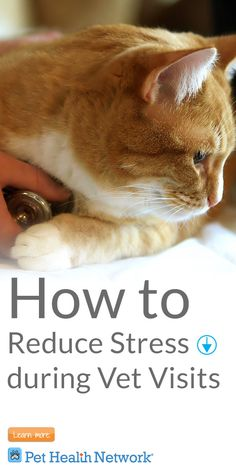 How to #reducestress during #vet visits  #pethealthnetwork