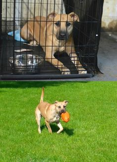 Happy Tail: Lex, now named Sandy, was one of many animals rescued after Hurricane Sandy. Bill and his family came to our shelter during a trip to NYC looking to adopt a cat, but ended up falling for Sandy instead. This shy pup became fast friends with her new family in PA, but faced the challenge of socializing at an annual house party. She initially stuck by her family's sides, but by the end of the night, she was working the party for belly rubs!