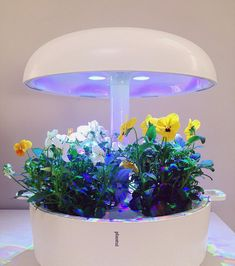 @daniele.caputo.333 Spring in my Plantui #plantui #garden #smartgarden #flowers #violet #natural #fresho #plant #plants #grow Smart Garden, Planter Pots, Commercial, Indoor, Natural, Spring, Flowers, Life, Instagram
