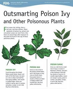 Get to know what common poisonous plants look like. | 39 Brilliant Camping Hacks To Try On Your Next Trip