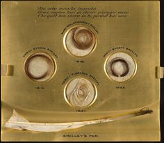 Locks of Percy's hair two years after he met Mary) and 1822 the year he died. It shows hair changing from a dark golden auburn to dark russet brown. Mary's is shown as a light golden brown. Their little son, Percy Florence, is very fair. Mary Shelley Quotes, The Modern Prometheus, Relic Hunter, The Frankenstein, Light Golden Brown, Of Montreal, Writers And Poets, World Of Books, Classic Literature