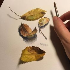 Another November themed oldie. Watercolor Plants, Watercolor Leaves, Watercolor Sketch, Watercolour Painting, Painting & Drawing, Watercolours, Botanical Art, Botanical Illustration, Illustration Art