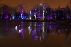 Orbs drift along the water's surface in Meadow Lake Magic, new at Illumination: Tree Lights at The Morton Arboretum!