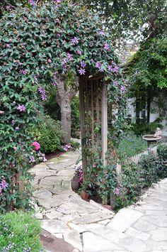 Flagstone walkway with trellised clematis