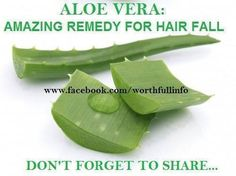 Aloe Vera juice is very effective to stop hair loss. Pure aloe gel can be applied directly to the scalp. This is helpful for preventing hair loss due to irritated, dry or infected scalp. Aleo Vera is a perfect for healing the scalp and bringing the pH balance to normal. After massaging the head with aloe gel, wait for few hours and then wash the hair with lukewarm water.