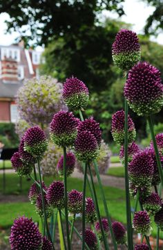 Chelsea Physic Garden | by Mark Wordy