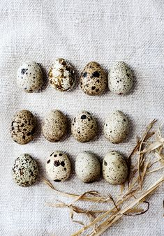 Quail eggs: colours and patterns by Kara Rosenlund Thanksgiving Outfit, New York Tourist, Weekender, Kara Rosenlund, Speckled Eggs, Spring Birds, Quail Eggs, Nature Collection, Background Pictures