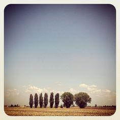"@mauroparolo's photo: ""#ig #iphone #igersadige #trees"""