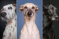 Dogs Questioning the Photographer's Sanity