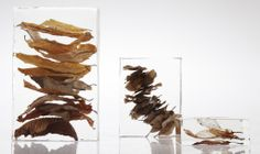Parish Stapleton, found objects from nature cast in resin
