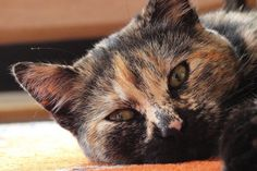 Evidence of supplement, herb and nutraceutical use with veterinary cancer patients grows.