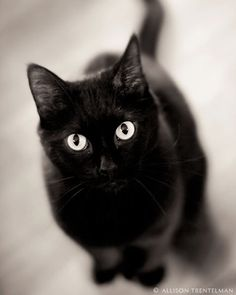 A cute little black kitty just in time for Halloween.