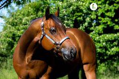 Sweet Rowdy by Rowdy Yankee Quarter Horse