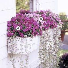 Window Box for shade A. Impatiens 'Accent Pink' -- 4 B. Impatiens 'Pink Swirl' -- 4 C. Dichondra 'Silver Falls' -- 6 by adela