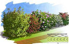 4 saisons - 1-Cornouiller ; fleurs fév-mars, caduc. Fruits rouges, comestibles. C moy / 2-Groseiller à fleurs 'Ribes sanguineum' ; en mars-avril. C moy / 3-Althaea 'Hibiscus syriacus' ; grandes fleurs en été. C moy / 4-Rosier rugueux ; Fleur juin à oct et fruits décoratifs. C rapide / 5-Oranger du Mexique 'Choisya ternata' ; feuille anis, persistant et odoriférant. Fleurs blanches mai & oct. C rapide / 6-Mahonia d'hiver 'M. media' ; fleurs de nov à jan, parfum de muguet. C lent