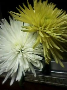 Flowers from Songbird