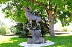 The rumor was that a statue of a Ram on the CSU campus had it's butt pointed directly at Boulder.