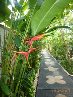 Beginner's Guide To Tropical Landscaping Design Plans Tropical Garden Design, Tropical Backyard, Tropical Landscaping, Landscaping With Rocks, Outdoor Landscaping, Bali Garden, Garden Villa, Side Garden, Garden Paths
