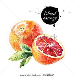 Watercolor blood orange. Isolated eco food fruit illustration on white background