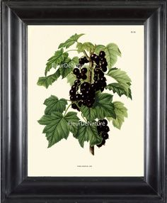 BOTANICAL PRINT Wendel 8x10 Botanical Art Print by FleurDeNature, $10.00