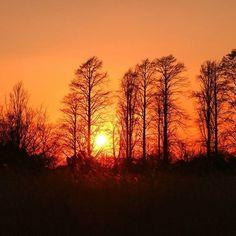 【nekotea_skywalker】さんのInstagramをピンしています。 《MetasequoiaTrees At Sunset.  メタセコイアの森 #葛飾 #水元公園 #夕焼け #夕焼け空 #森 #tokyo #metasequoia #sky #orangesky #skyporn #forest #trees #park #japan #eyeem #eyeemoninstagram #nature #eyeemphotography #silhouette》