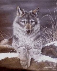 The Yearling. Wildlife Paintings, Wildlife Art, Wolf Puppies, Wolf Pictures, Art Van, Fox Art, Wolves, Graham, Husky