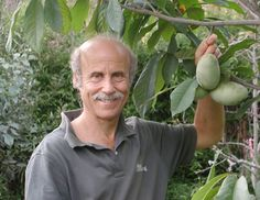 APPLES TREES—the fruit everyone thinks they want in their backyards—aren't easy to grow ...And if you're keeping track, apples aren't native. Fruit expert Lee Reich offers up two unusual but delicious American native fruit-tree beauties that require little more than to be planted. In print or the latest public-radio podcast, how to grow pawpaws & persimmons to perfection.