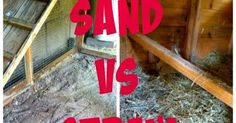 The answers to the debate about what is the best bedding to use in the chicken coop. Sand vs. straw chicken bedding.