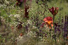 Border als 'veldboeket' | Chelsea Flower Show 2014 | TuinTuin.nl
