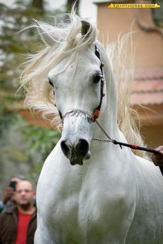 Horse displays it's God given magnificence!