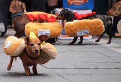 Awwww! #dachshund #teckel #doxie