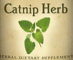 CATNIP HERB Tincture Natural Stress and Digestion Aid Calming Liquid Extract USA