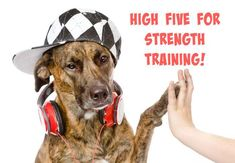 high five for strength training http://slimdoggy.com/strength-training-for-dogs-working-shoulders-with-the-high-five/