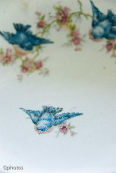 Pleasant View Schoolhouse: Bird China for Felix