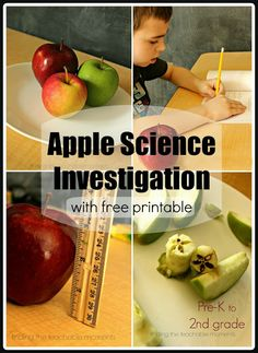 Apple Science Investigation for Pre-K - 2nd grade.  Observe, predict, and compare/contrast different varieties of apples... includes experiments, art, and free printable investigation book to record findings.