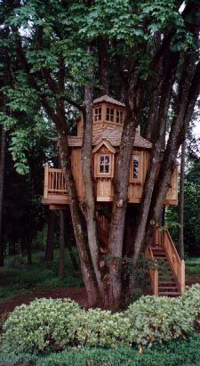 Treehouse yes please