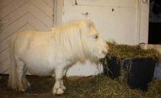 The majestic french poney, Aka kéké - Imgur