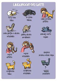 Linguaggio dei gatti