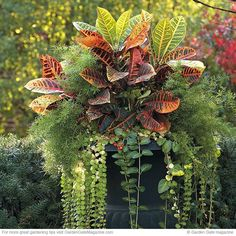 & bold container plants Make a big impact with these impressive container plants.Make a big impact with these impressive container plants. Planting Fruit Trees, Fruit Plants, Edible Plants, Air Plants, Fall Vegetables, Container Gardening Vegetables, Container Plants, Vegetable Gardening, Indoor Gardening Supplies
