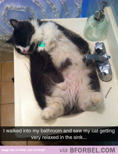 Cat Relaxation…