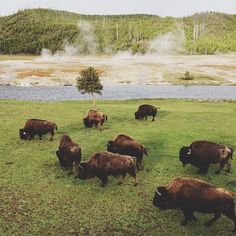 I spent several years of my childhood growing up near Yellowstone. This makes me so nostalgic. | Photo by Kevin Russ